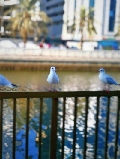 Birds_collection Building Exterior Sharjah Uae City Life Built Structure Jordan❤ Nature_perfection Arabic Culture Arts Water Reflection Water Bird