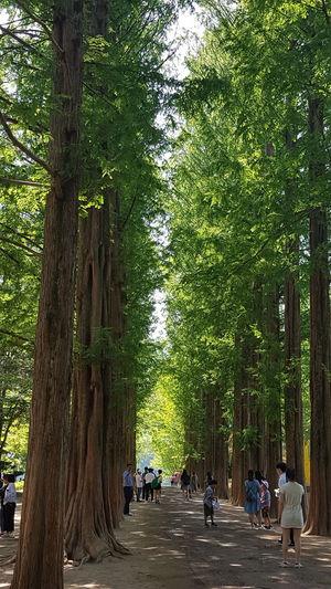 Tree Women Tree