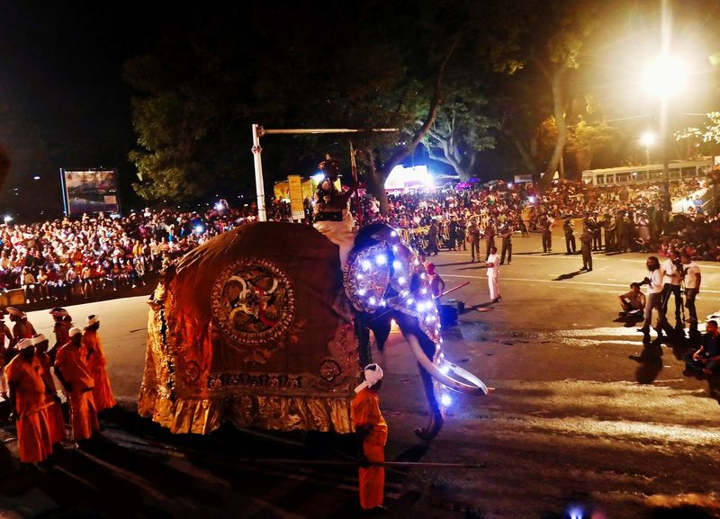 Esala Perahera 2018 Elephant ♥ Esala Perahera 2018 Proccession Streetphotography Buddhism EyeEmNewHere Crowd Fan - Enthusiast Audience Illuminated Men Nightlife Performance Youth Culture Occupation