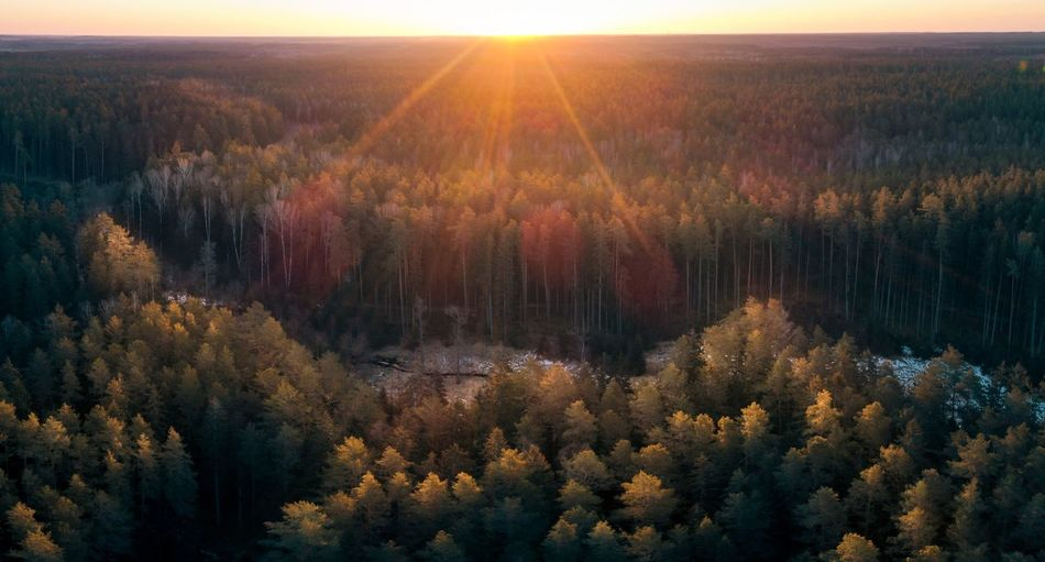 Sunrise in the Forest Aerial View Aerial Shot Aerial Photography Drone  Dronephotography Forest Forest Photography Woods Tree Dawn Sunset Rural Scene Multi Colored Fog Agriculture Autumn Sunlight Sun WoodLand Pine Woodland