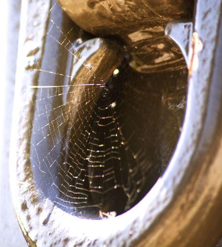 Spider Web Iron Ring Natura Life Luce