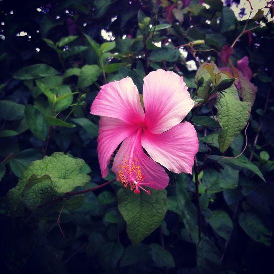 Natureza Flowers