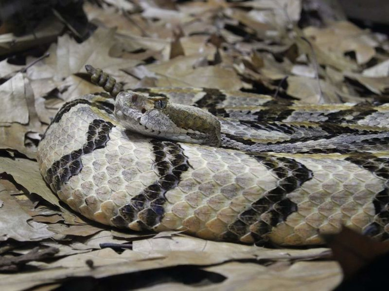 NATUR Schlange  Snake