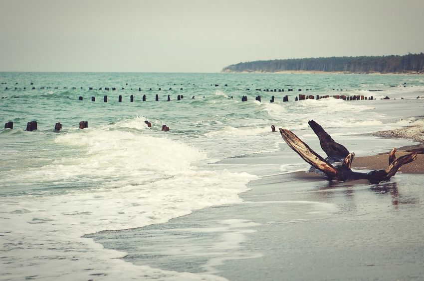 Driftwood on baltic sea beach of darss peninsula, germany. Mecklenburg-Vorpommern Beach Driftwood Waves Crashing Darß Baltic Sea Ahrenshoop Weststrand