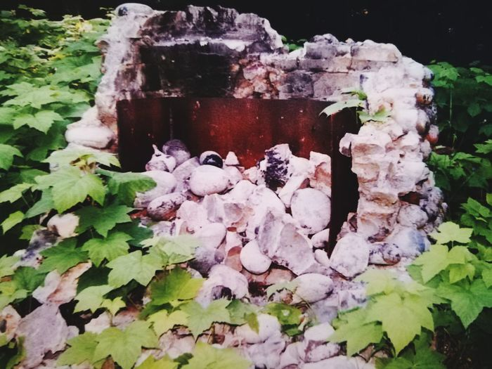 Remnants of the Crying Cabin Forrest Photography Old Fireplace Forrest Find Close-up Growing Weathered Residential Structure Deterioration Abandoned Damaged Ruined