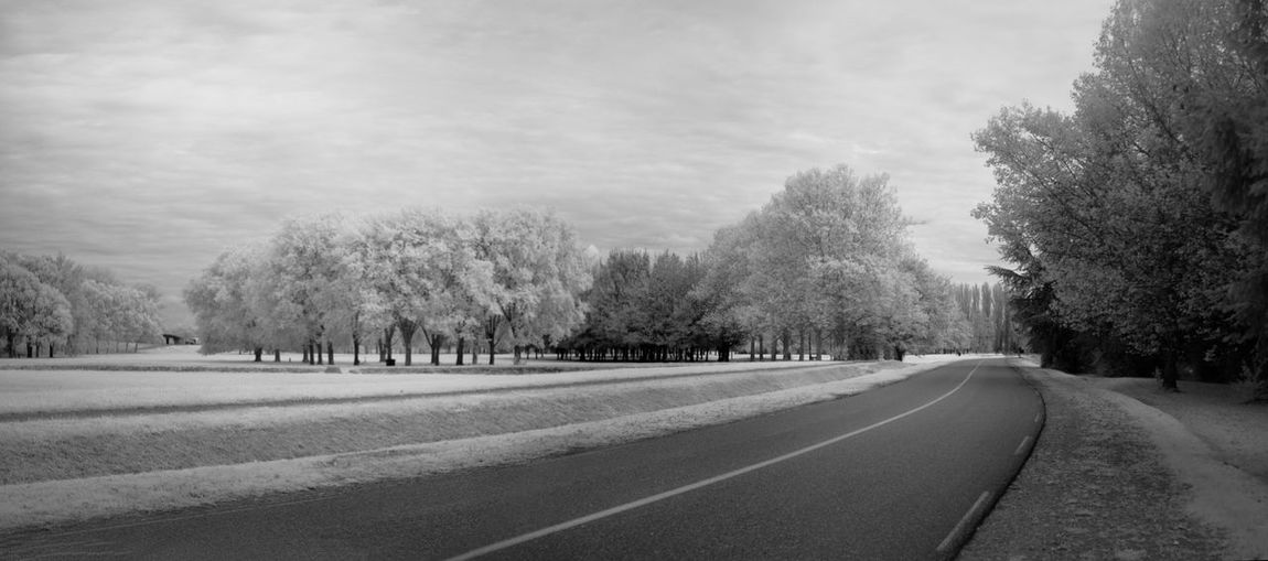 Empty road along trees in winter