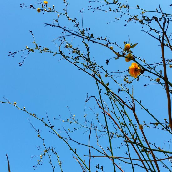 Bird Tree Branch Flower Blue Sky Animal Themes Close-up Blooming Plant Life Flower Head Spread Wings Single Flower In Bloom