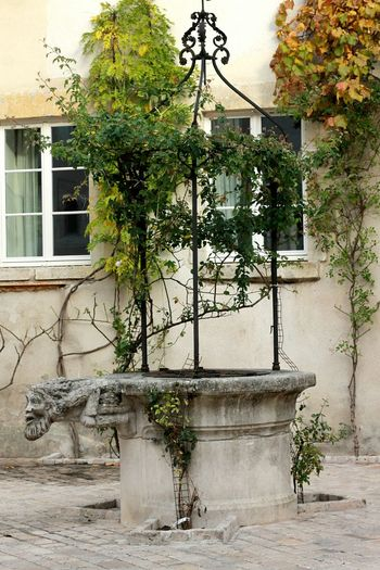 Le vieux Orléans... Ancien Orléans Puit Joli Love Photography Canon Canonphotography Feuilles Autumn