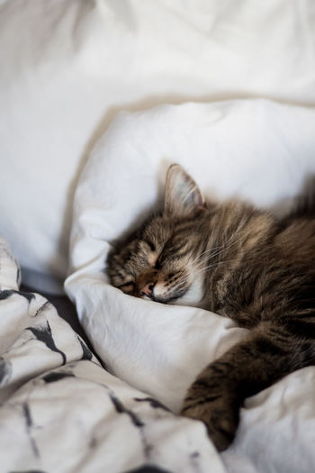 Close-up of kitten sleeping on bed