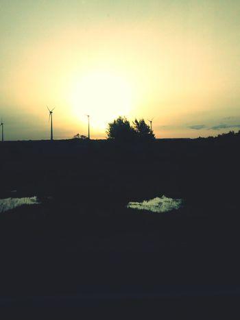 Sunset Astrorei Sol