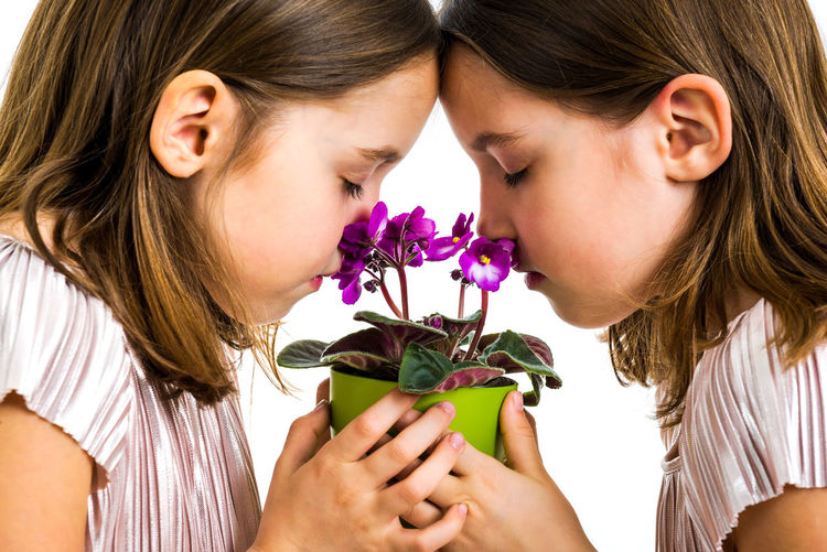 Identical twin girl are smelling viola flower green pot. Little girls children are mourning with with closed eyes. Concept of grief losing loved ones. Profile view, studio, isolated white background Flower Flowering Plant Child Girls Two People Females Women Twins IDENTICAL TWINS Gift Present Smelling Smelling The Flowers Sisters Family Flowers Flower Pot Pot Potted Plant Viola Violet Violet Flowers Green Young Adult Childhood Children Garden Gardener Holding Giving Hands Kid Lifestyles Violaceae Fun Plant Dress Surprise Togetherness Positive Emotion Hairstyle Grief Grieving Sad Sadness Death Funeral Profile View Studio Shot White Background