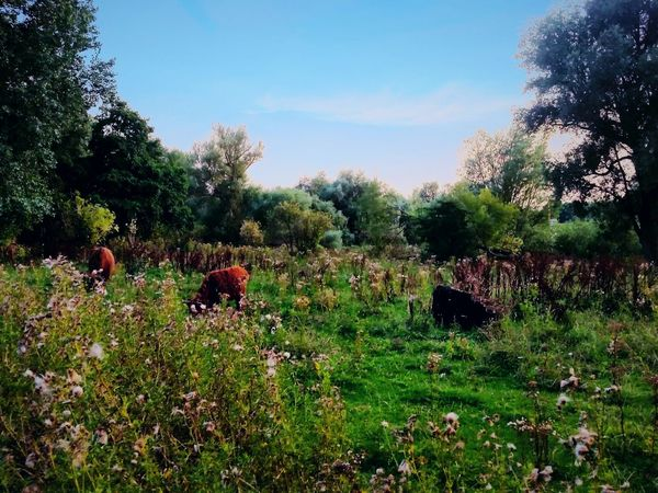 Beauty In Nature Field Tranquility Green Color Plant Tree Nature Park - Man Made Space Grassy Rural Scene Scenics Tranquil Scene Grass Animals Nature