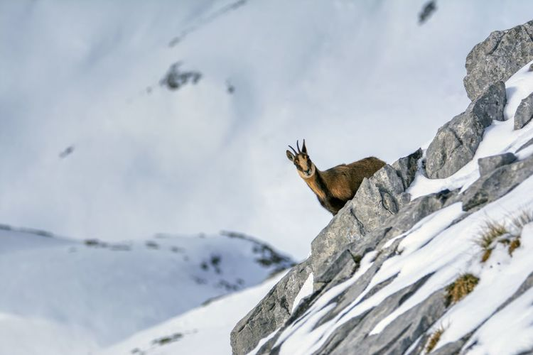 Low angle view of animal on snow covered mountain