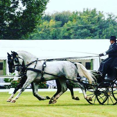 Claudio Fumagalli Welovedrivingsport Combineddriving Fahrsport Sportkörning Drivingsport Yourdailyhorses Equestrian Carriagedriving Attelage