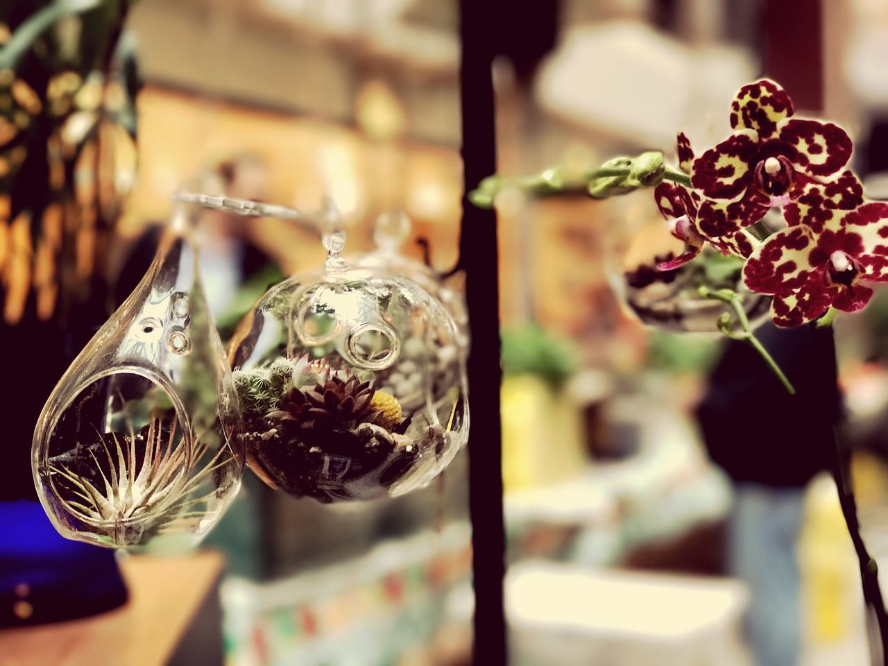 focus on foreground, hanging, close-up, celebration, no people, indoors, flower, day, fragility