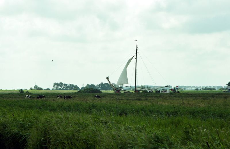 Grachtensegeln Ship Passing Cows The Netherlands Cows In A Field Sailing Sailing In A Canal Ship Traditional Sailing Ships