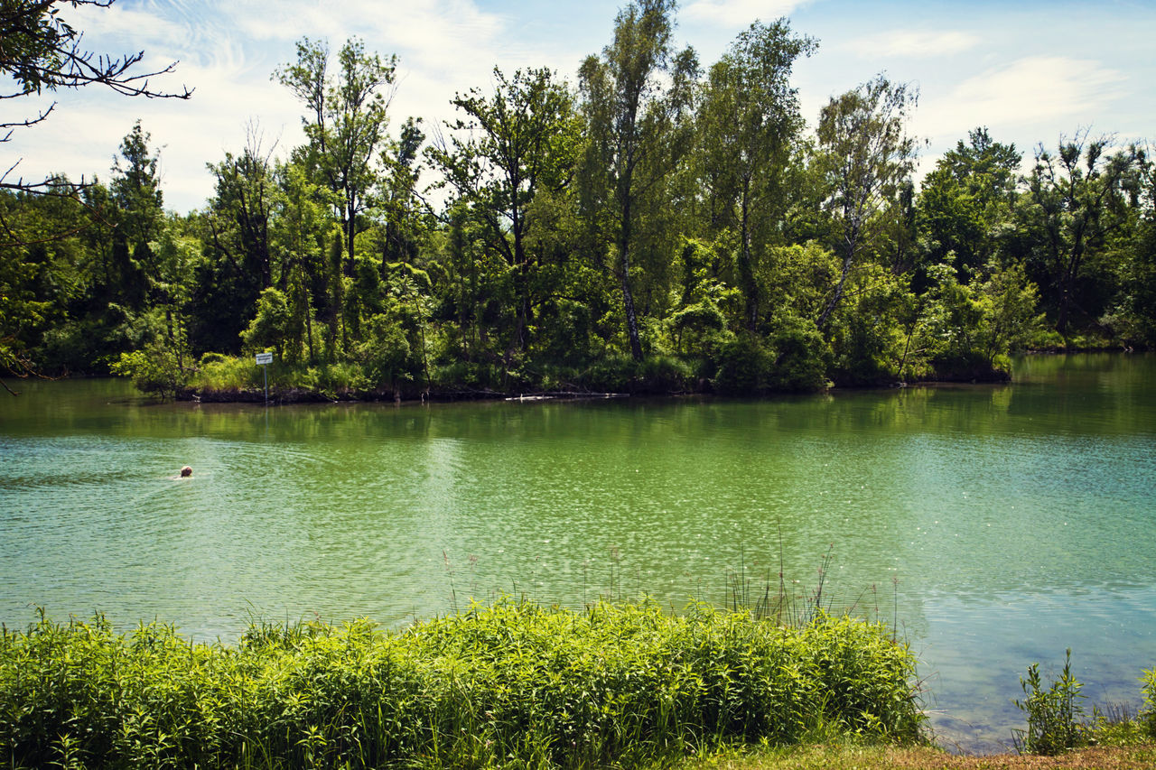tree, water, nature, lake, growth, beauty in nature, scenics, tranquility, tranquil scene, green color, day, outdoors, plant, no people, sky, grass