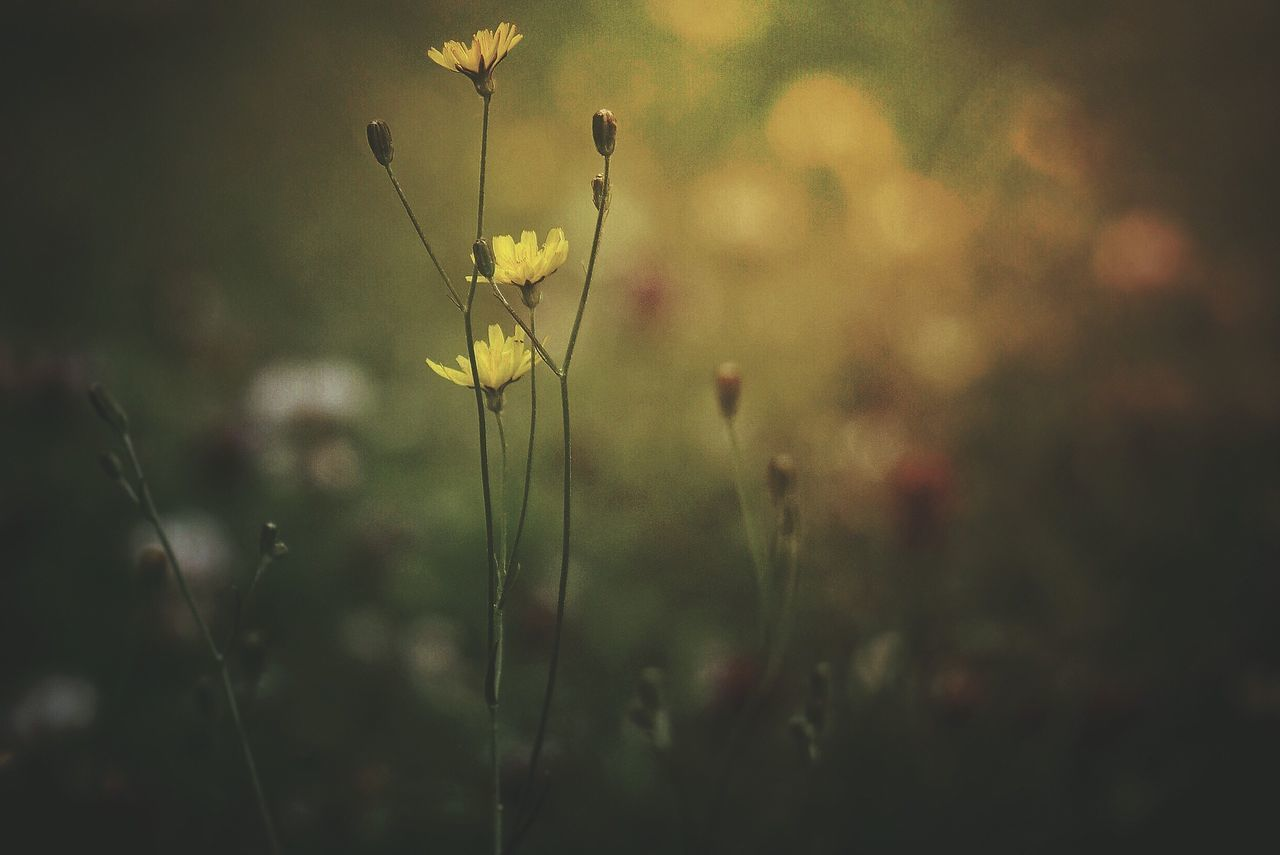 growth, nature, plant, flower, field, focus on foreground, no people, beauty in nature, outdoors, close-up, grass, day, fragility, freshness