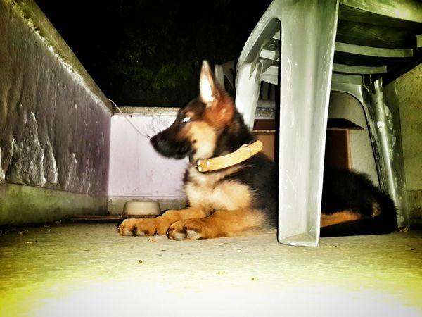 my dog Hera Animal_collection Dog Love Friends Hello World