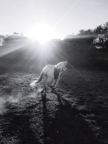 Ways Of Seeing Sunlight Horses Running Creative Light And Shadow Horses Animals Dreamlike Pets Corner Rural Scene Sunlight And Shadows Black And White Photography Black And White Horse Pets One Animal Domestic Animals Animal Nature Animal Themes No People Mammal Day Outdoors Galloping Horse Welcome To Black Black And White Friday EyeEm Ready