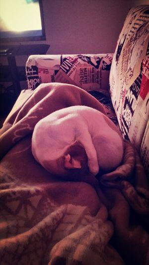 uyursak boyle uyuruz:) Enjoying Life