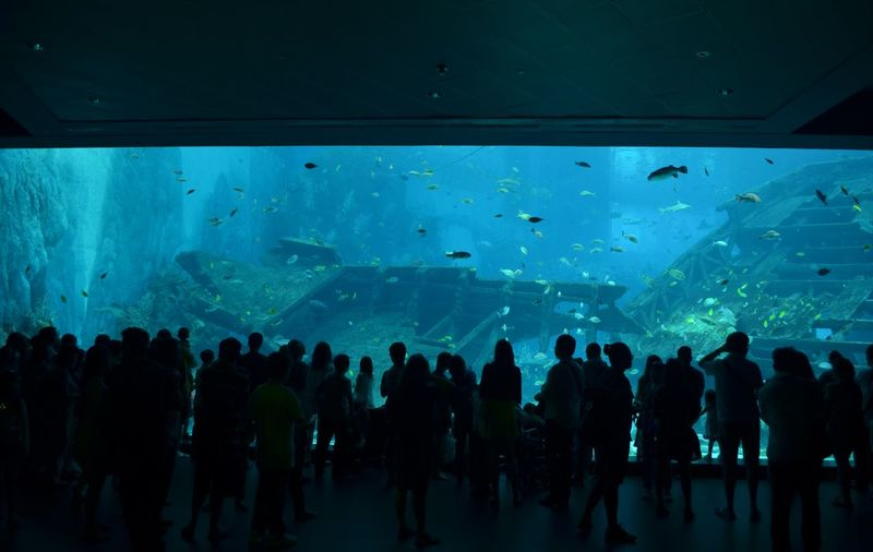 People Visiting Aquarium