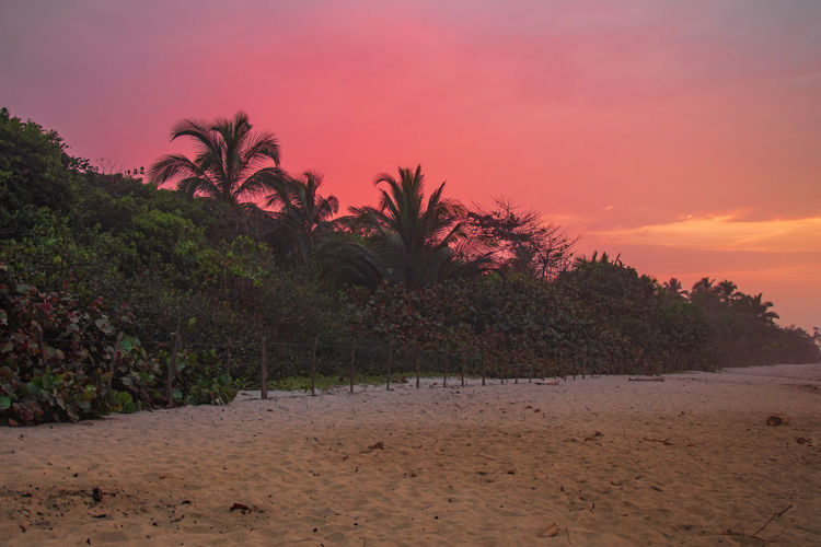 Sky Sunset Tropical Climate Palm Tree Tree Plant Land Tranquil Scene Tranquility Scenics - Nature Nature Beauty In Nature Growth Beach No People Outdoors Orange Color Non-urban Scene Environment Water Coconut Palm Tree Landscape Nature Dream Red Skyscape Palm Tree Tree Vacations Tourism Caribbean Blue Green Color