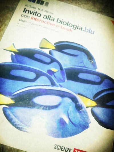 Scienze ... AAAAHHH !!