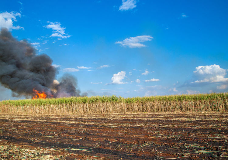 Fired Agriculture Beauty In Nature Burning Cloud - Sky Day Environment Field Fire Fire - Natural Phenomenon Heat - Temperature Land Landscape Nature No People Outdoors Plant Pollution Power In Nature Rural Scene Scenics - Nature Sky Smoke - Physical Structure Sugar Cane Field