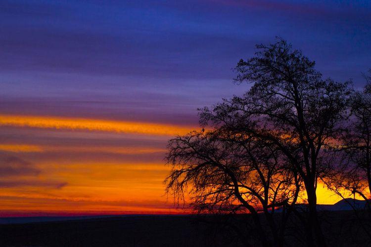 Sunset Sunset Silhouettes Sunset_collection Sunsetlover Sunset Trees  Turkey Konya Konyagunbatimi