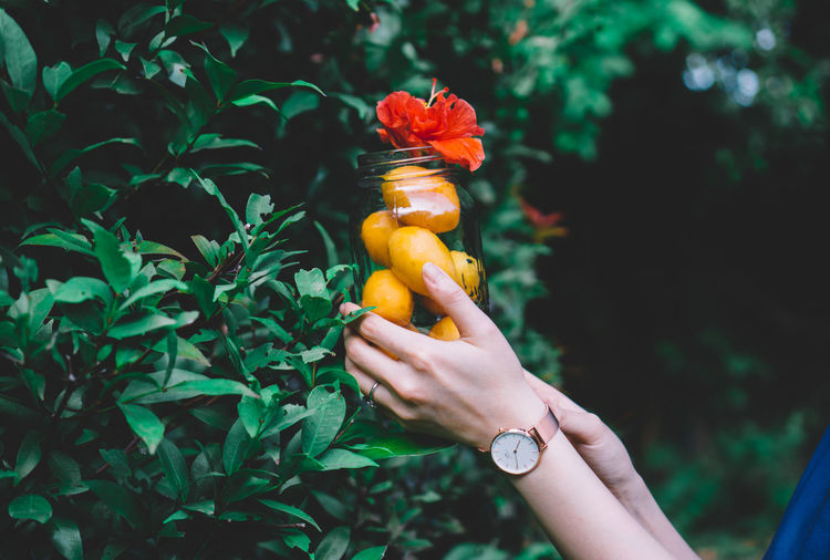 Close-up of hand holding jar with mango and flower