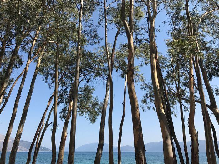 Trees Tree