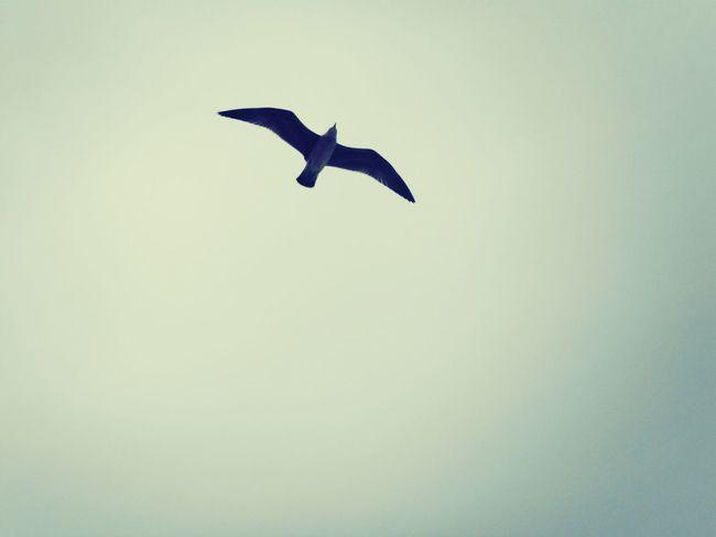 Les Sables-d'olonnes Vendée Mouette Oiseau