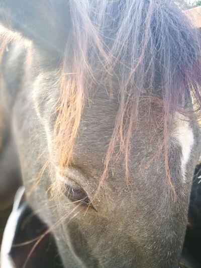 Horse Horse Friends Horse Riding Horse Ears Horse Eating Horseback Riding Horse Eye Close-up