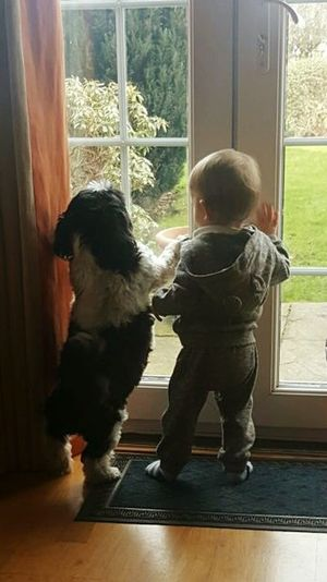 Indoors  Window Domestic Room Childhood One Boy Only Baby Boy Dog Pet Photography  Pet Dog  Boy And Dog Best Friends Domestic Life Full Length Home Interior One Person Hardwood Floor Children Only People Living Room Leisure Activity Domestic Kitchen Day Radiator Adult