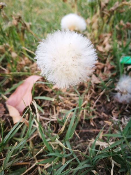 Fragility Nature Flower Dandelion Growth Uncultivated Softness Weak Close-up Freshness White Color Plant Wildflower Day Beauty In Nature Flower Head Outdoors Focus On Foreground No People Grass Breathing Space The Week On EyeEm Perspectives On Nature