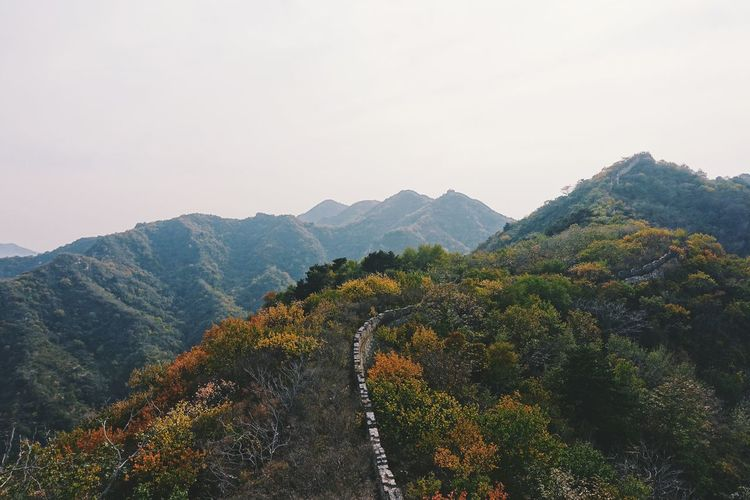 Hiking an unrestored section of the Great Wall was an incredible experience - it's amazing to see how nature has taken over. Abandon_seekers Abandoned Abandoned Buildings Abandoned Places ASIA Autumn Autumn Colors Autumn Leaves Beijing China Explore Fall Fall Beauty Great Wall Of China Greatwall Green Landscape Overgrown Scenery Travel Unique VSCO Vsocam Wild Wonder