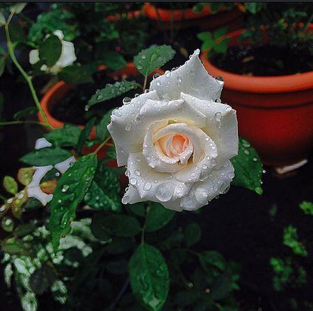 - ILoveYou.♡ God !! Flowerwhite Flowers