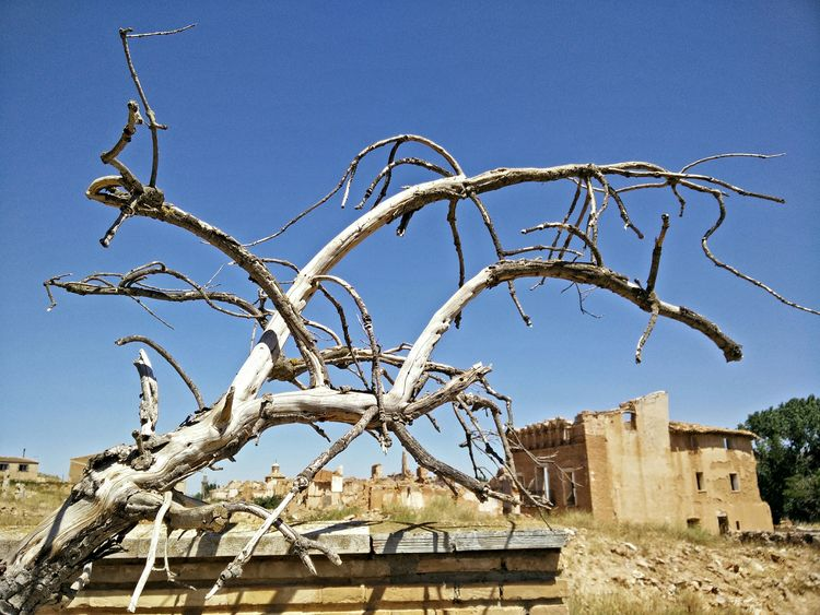 A Dead Tree in a Dead City . Ruins