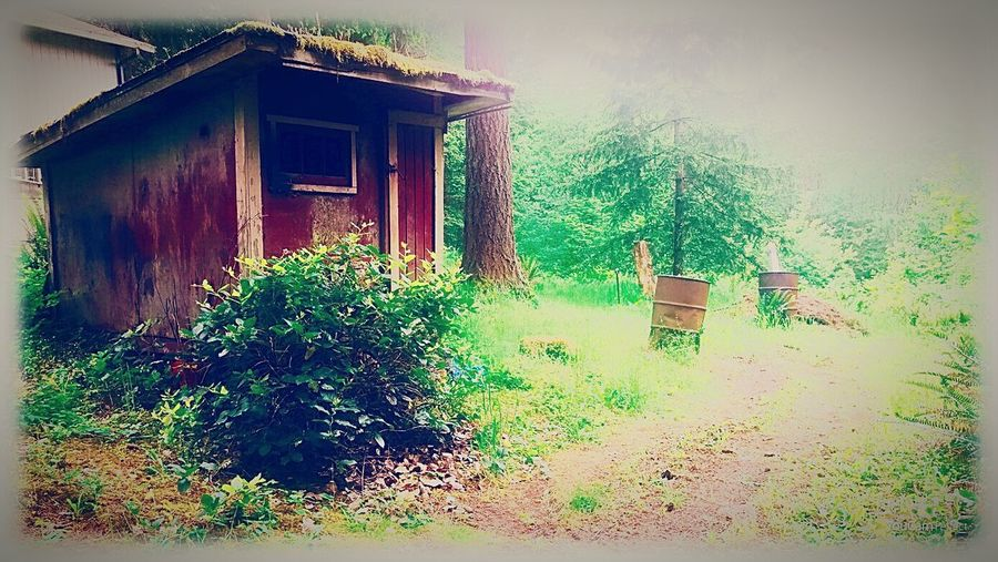 """Whatever satisifies the soul is the truth"" ~ Walt Whitman STAND ALONE COMPLEX Walking Alone... Showing Why I Could Be An Open Editor Eye4photography  EyeEm Nature Lover The Path We Travel The Shack Taking Photos"