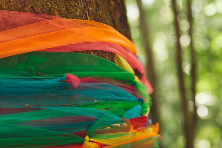 Focus On Foreground Plant Forest Day Close-up Nature Multi Colored Tree Green Color No People Outdoors Land Trunk Tree Trunk Growth Beauty In Nature Selective Focus Orange Color WoodLand Tranquility