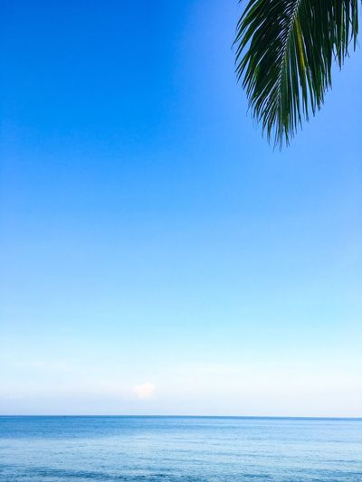 Ocean and Sky with Palm Leaf Sea Sky Water Blue Beauty In Nature Horizon Tree Tranquility Horizon Over Water Scenics - Nature Copy Space Nature Plant Palm Tree Day Clear Sky