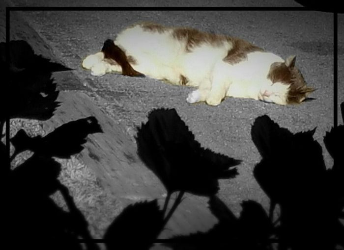Alertness Animal Animal Head  Animal Themes Black And White Cat Catnap Comfortable Cute Domestic Animals Found A Sunny Spot I Love My Cat Mycat Mylove Love One Animal Pets Relaxation Relaxing Sleepy Softness Zoology