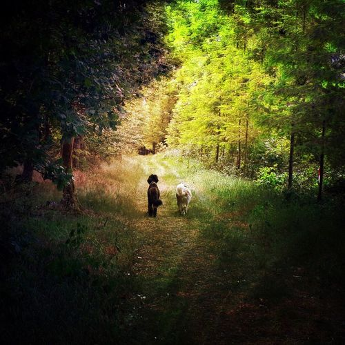Togetherness Friendship Domestic Animals Dog Nature Forest Outdoors Dogs Throughthickandthin Zusammenhalt Hund Chiens Walking