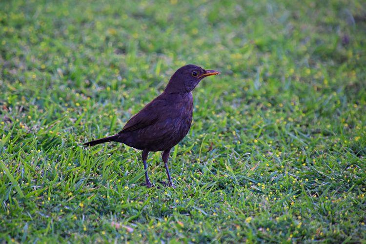 Side view of bird on field
