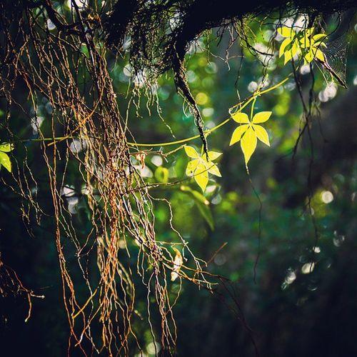大地轻卷起了一阵微风 挑逗着枝头的嫩叶…快坠入来大地的怀抱中来吧,这是你最终的归宿 霜降