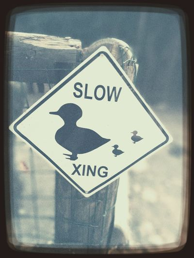 Slowxing Papere
