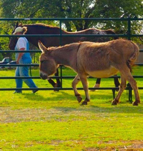 Me, my Horse and our Friend Jenny EyeEm Animal Lover I Love Horses Appaloosa I Love Donkeys I Love Appaloosa's Beautiful ♥ Family Pet Riding Horses Çøłôūrfûłł Höršęś Donkey