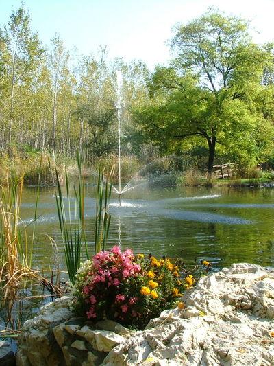 Nyerges Hotel Monor Csillag Flowers Fountain Garden Garden Photography Lake Nature Nature On Your Doorstep Nature Photography Outdoors Plant Rockery Star Szökőkút Természet Today's Hot Look Virágok