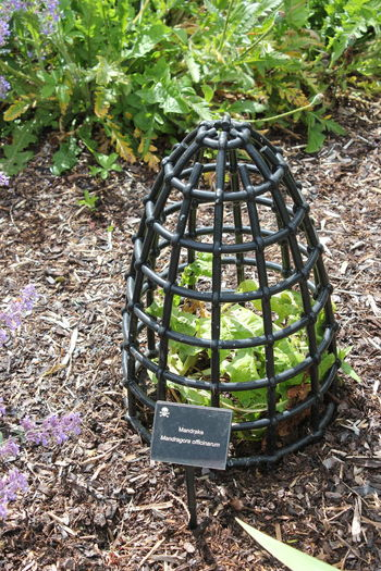 Blarney Castle Day Forest Garden Garden Photography Ireland Ireland🍀 Leaves Outdoors